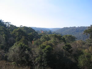 Rofe Park view