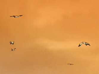 File:Seagulls.png