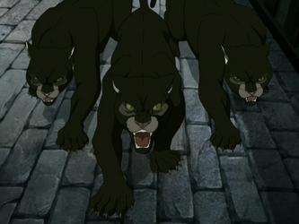 Pygmy pumas