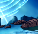 Tijgerzeehond