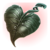 Heart Shaped Herb
