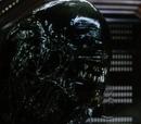 Cloned Xenomorph
