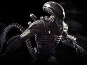 Alien MKX