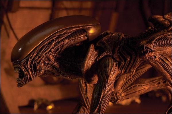 xenomorph alien  Xenopedia  FANDOM powered by Wikia