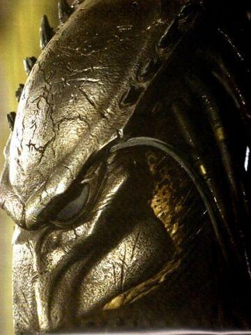 File:Depredador (8).jpg