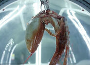 Baby trilobite moviestill