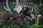 Crossbreeds