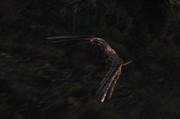 Falcon01