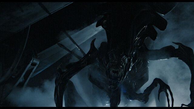 File:Aliens 21.jpg