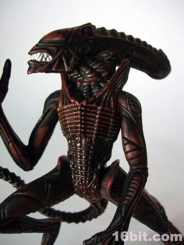 File:0359-aliens-hive-wars-warrior-predator2.jpg