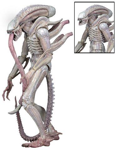 File:Albino-Alien-Aliens-Series-9-by-NECA-002.jpg
