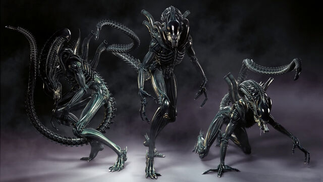 File:Xenomorph alien aliens desktop 1920x1080 hd-wallpaper-862277.jpg