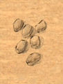 Coal item artwork BG2.png