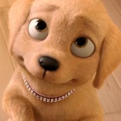 Taffy Great Puppy Adventure