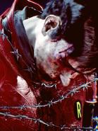 Tortured Robin