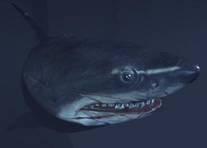 SharkArkham1