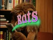 Rats Title
