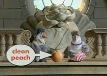 Pigeons Clean Peach