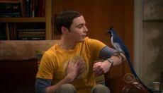 Sheldon&thebird