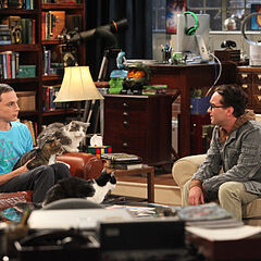 Sheldon brings his cat to work.
