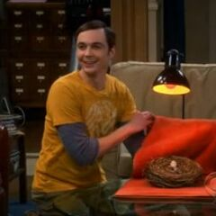 Sheldon incubates the jay's egg in its nest with a towel and <a href=