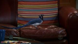 Bird on Sheldon's seat.png