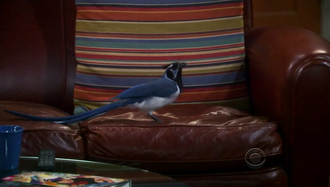 Bird on Sheldon's seat