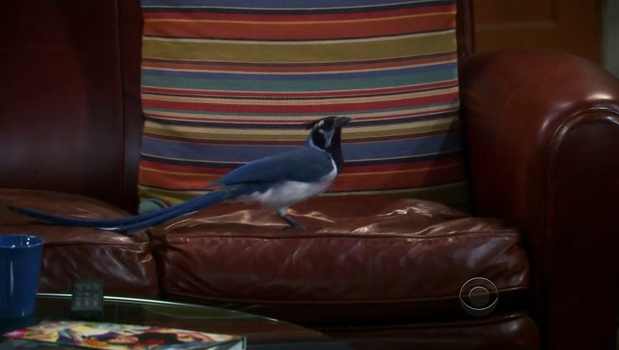 File:Bird on Sheldon's seat.png
