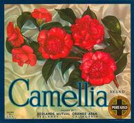 Camellia-brand-oranges