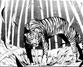 Innocentsoul tiger