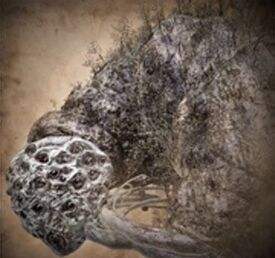 Rom the vacuous spider bloodborne wiki wikia