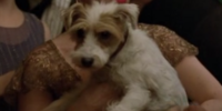 Regina (Dog)