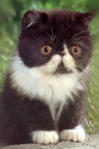 File:Cute kitten.jpg