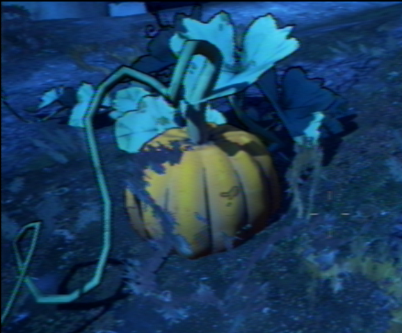 File:Pumpkin 1.png