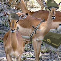 File:Impala Armed Forces.jpg