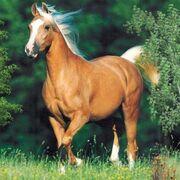 Cavalos-fotos-p.jpg