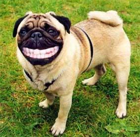 Ficheiro:Cachorro sorrindo7.jpg
