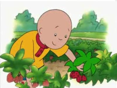 Caillou Goes Strawberr...