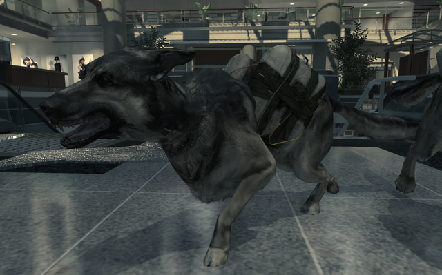 File:Dog strapped with C4 MW3.png