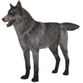 Wolf model 1 fur CoDG.png