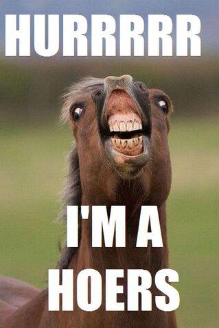 File:Im a horse.jpg
