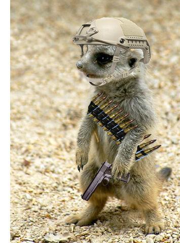File:Meerkat Helmet With Pistol And Ammo Belt Photo.jpg