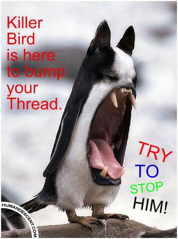 File:WierdBirdBump.jpg