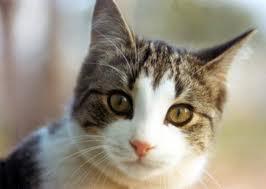 File:Pussy cat.jpg
