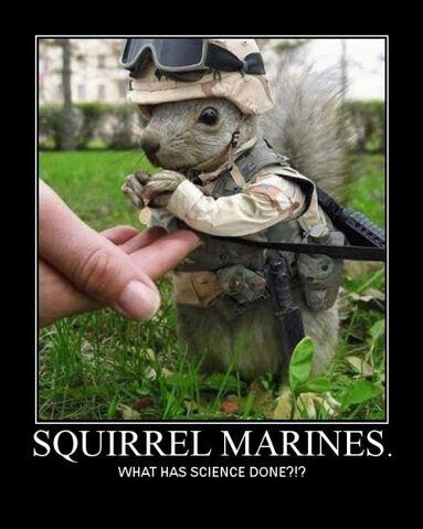 File:Squirrel Marines.jpg