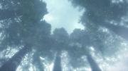 Frozen Forest BO3