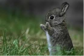 File:Clapping Rabbit.png