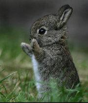 Matthew's bunny