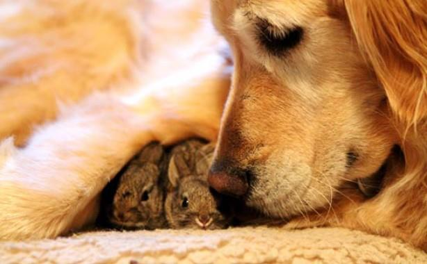 Image Golden Retriever And Baby