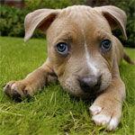 File:Dog.jpg